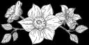 freya-flower-divider64
